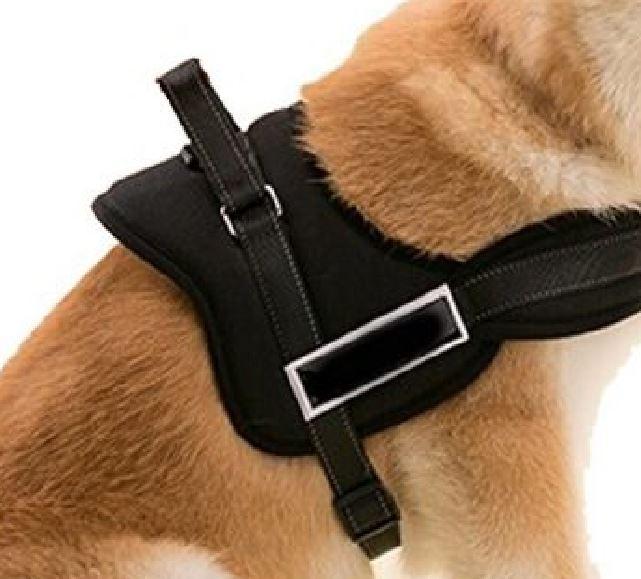 Argolla de anclaje arnes para perros antitiron
